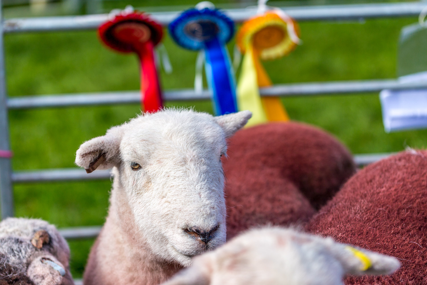 Loweswater Show 2018-7