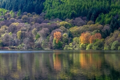 Loweswater circuit, Holme Wood