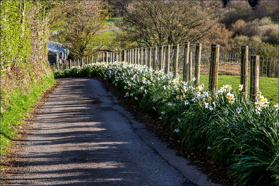 lane from Hudson Place Loweswater