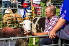 Loweswater Show, herdwick