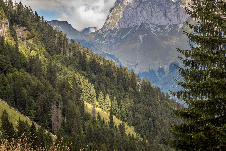Mont de Grange-42