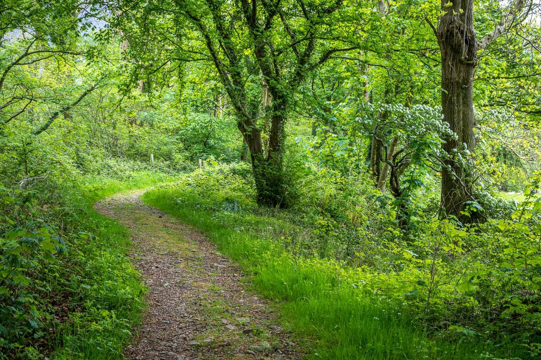 Roan Wood Wasdale