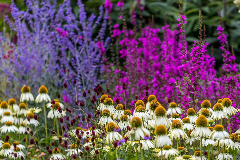Newby Hall garden, borders