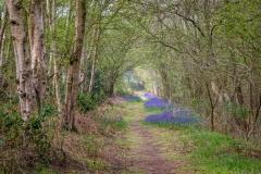 North Cliffe Wood  walk