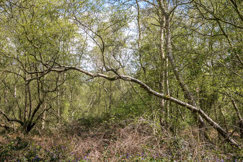 Northcliffe Wood
