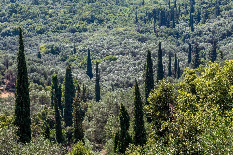 Old Perithia walk, Corfu walk