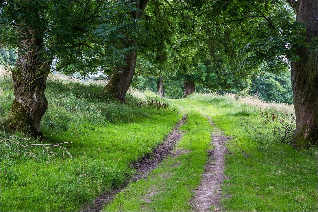 Levisham to Pickering walk, Sleights Road