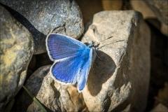 Ibon de Piedrafita walk, butterfly