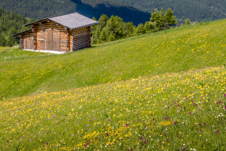 Pralongia meadows