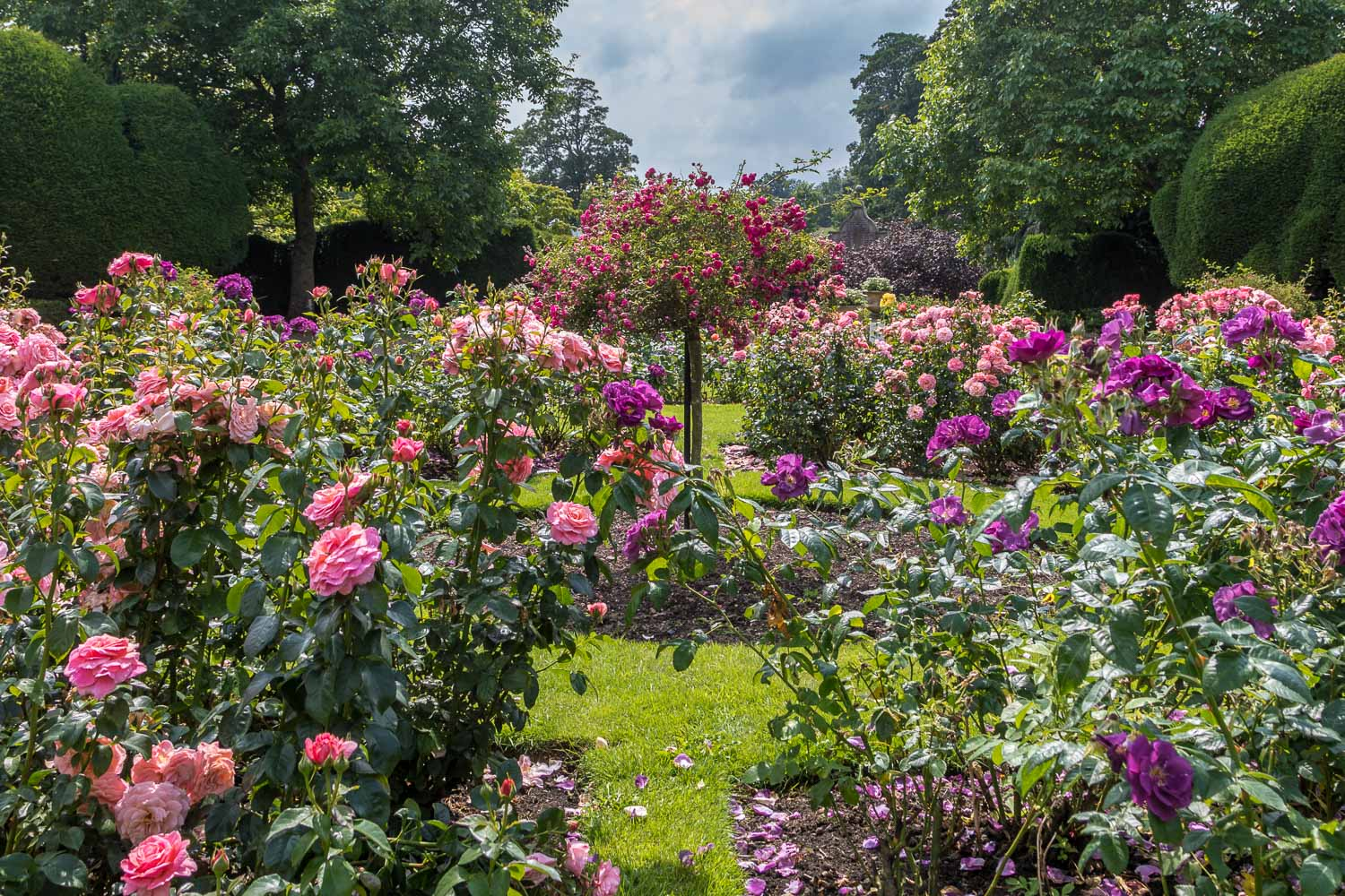 Raby Castle rose garden