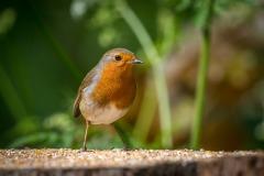 robin Bird Watchers' car park