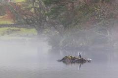 Rydal Water walk, heron