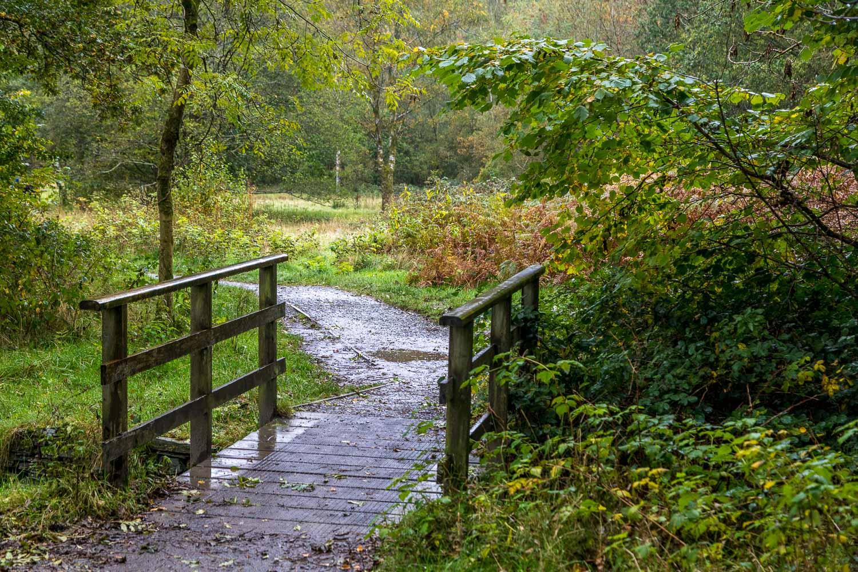 Rydal walk, White Moss