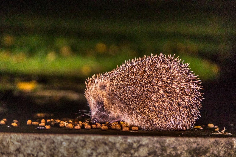 Hedgehog Lake district