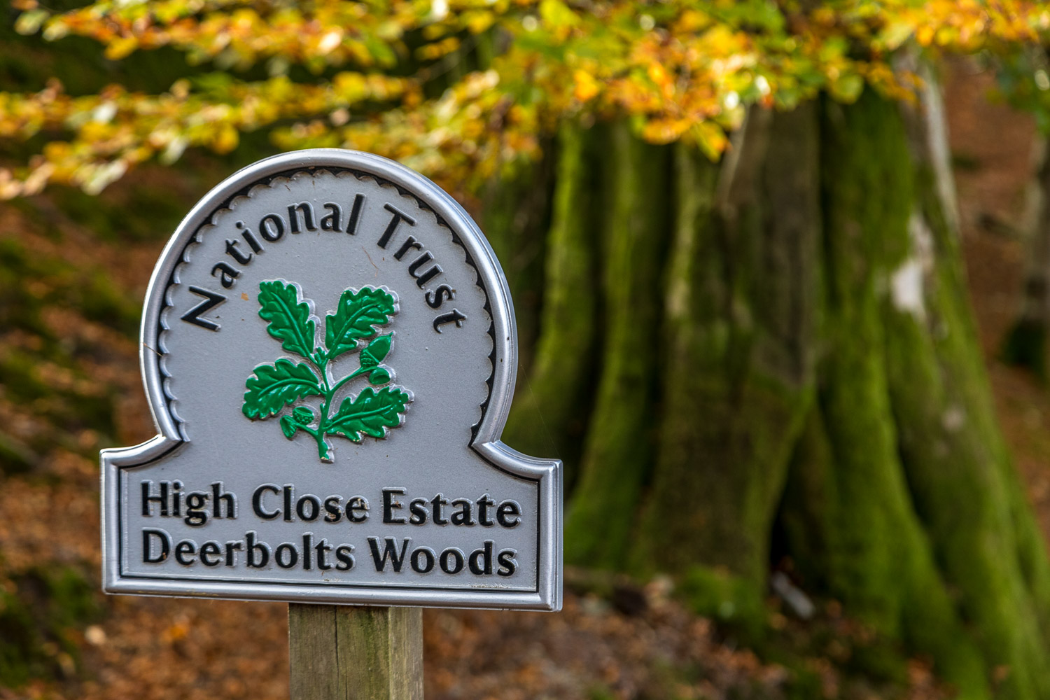 Rydal Water walk, Deerbolts Wood