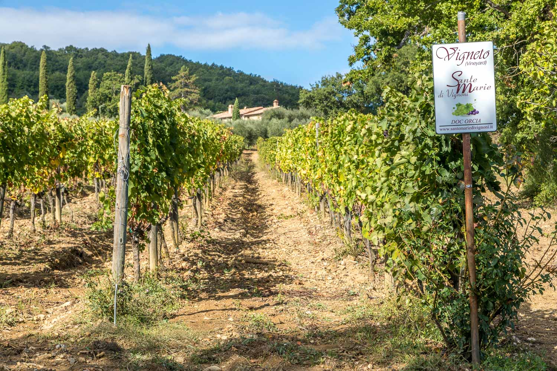Sante Marie di Vignoni vineyard