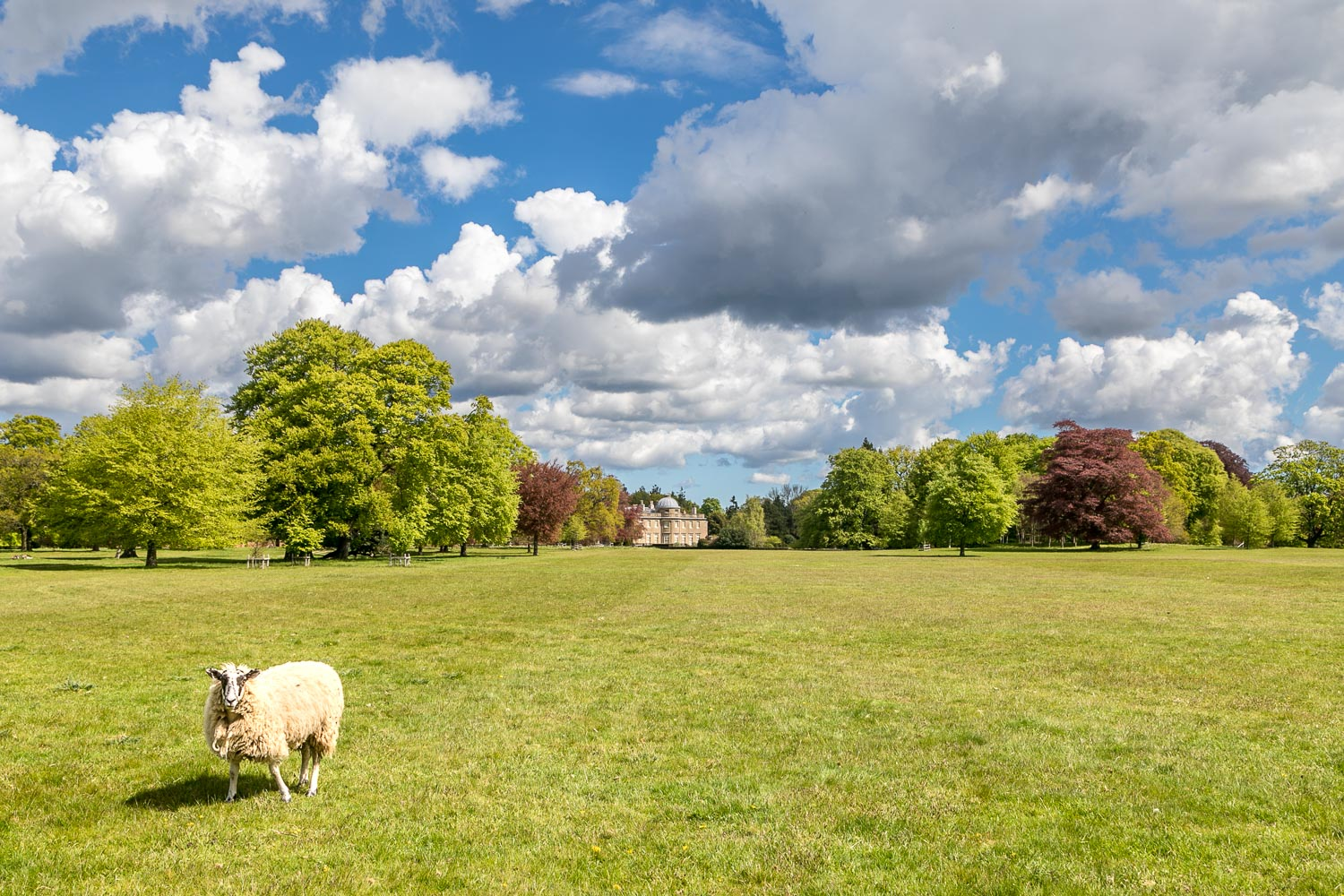 Scampston Hall, Park, Capability Brown