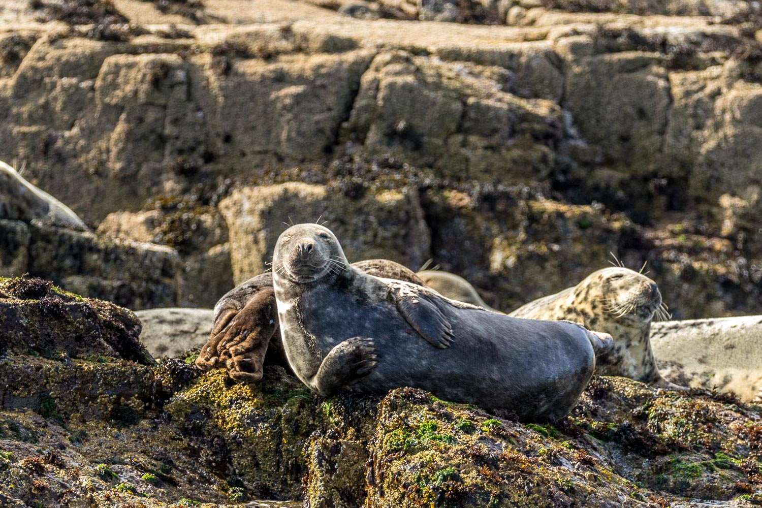 Farne Islands seals