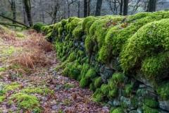Johnny Wood, moss, dry stone wall