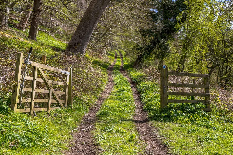 Thirlsey Wood