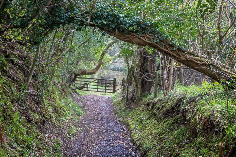 Haggland Wood