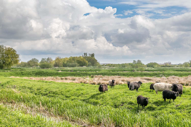 Skerne Wetlands conservation area