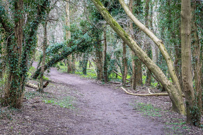 Brantingham walk, South Wold Plantation
