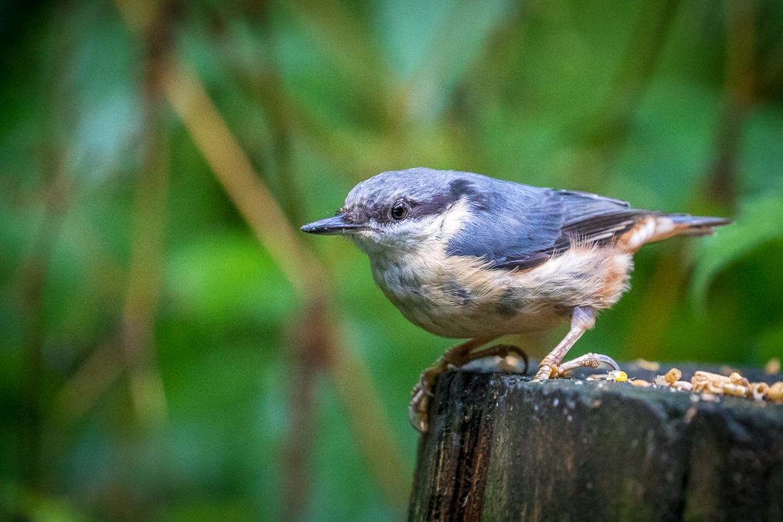 Birdwatcher's car park in Forge Valley