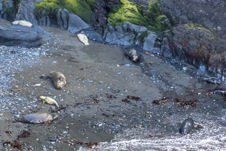 Seals, Pembrokeshire