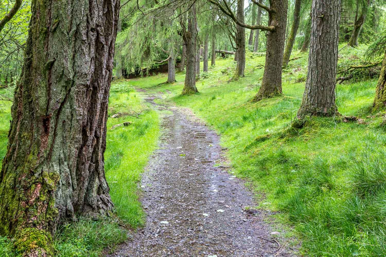 Tarn Hows walk, Rose Castle Plantation