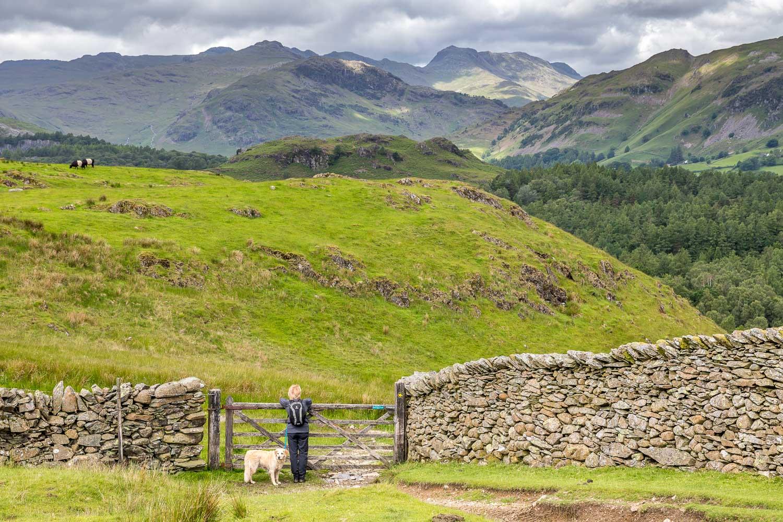 Tarn Hows walk, Bowfell