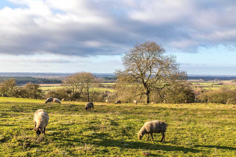 Lincolnshire plain