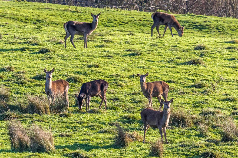 Tealby walk, deer park