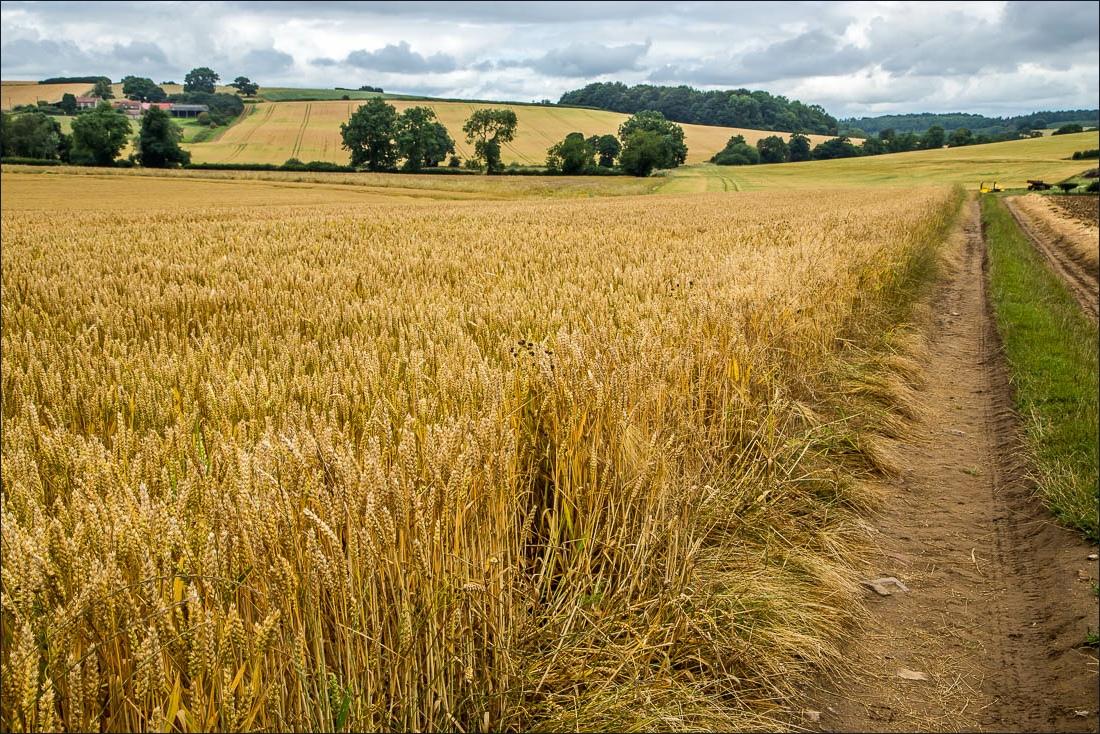 Terrington walk