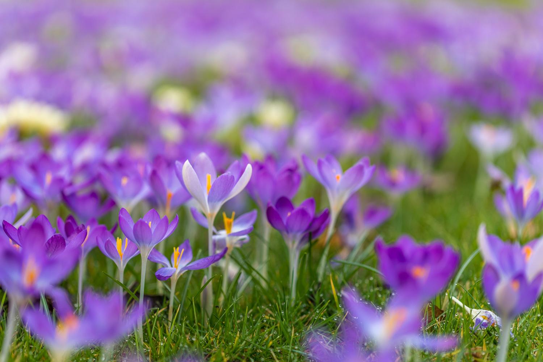 spring-16