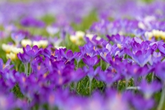 spring-17