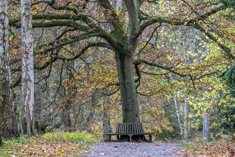 Thorp Perrow Jubilee Oak