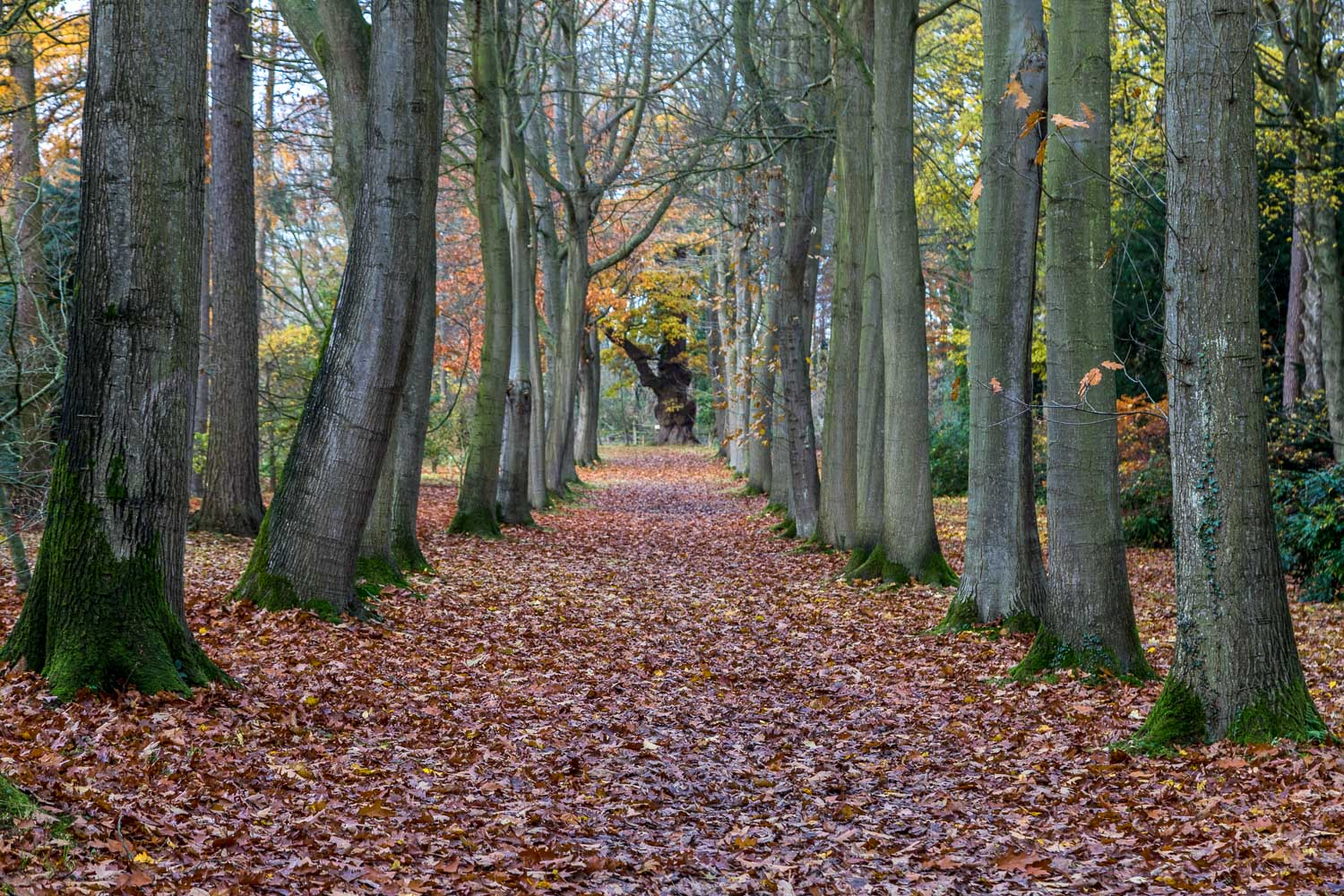 Thorp Perrow Arboretum, Red Oak Avenue