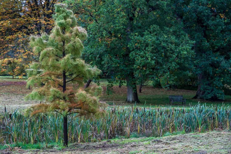 Thorp Perrow, autumn