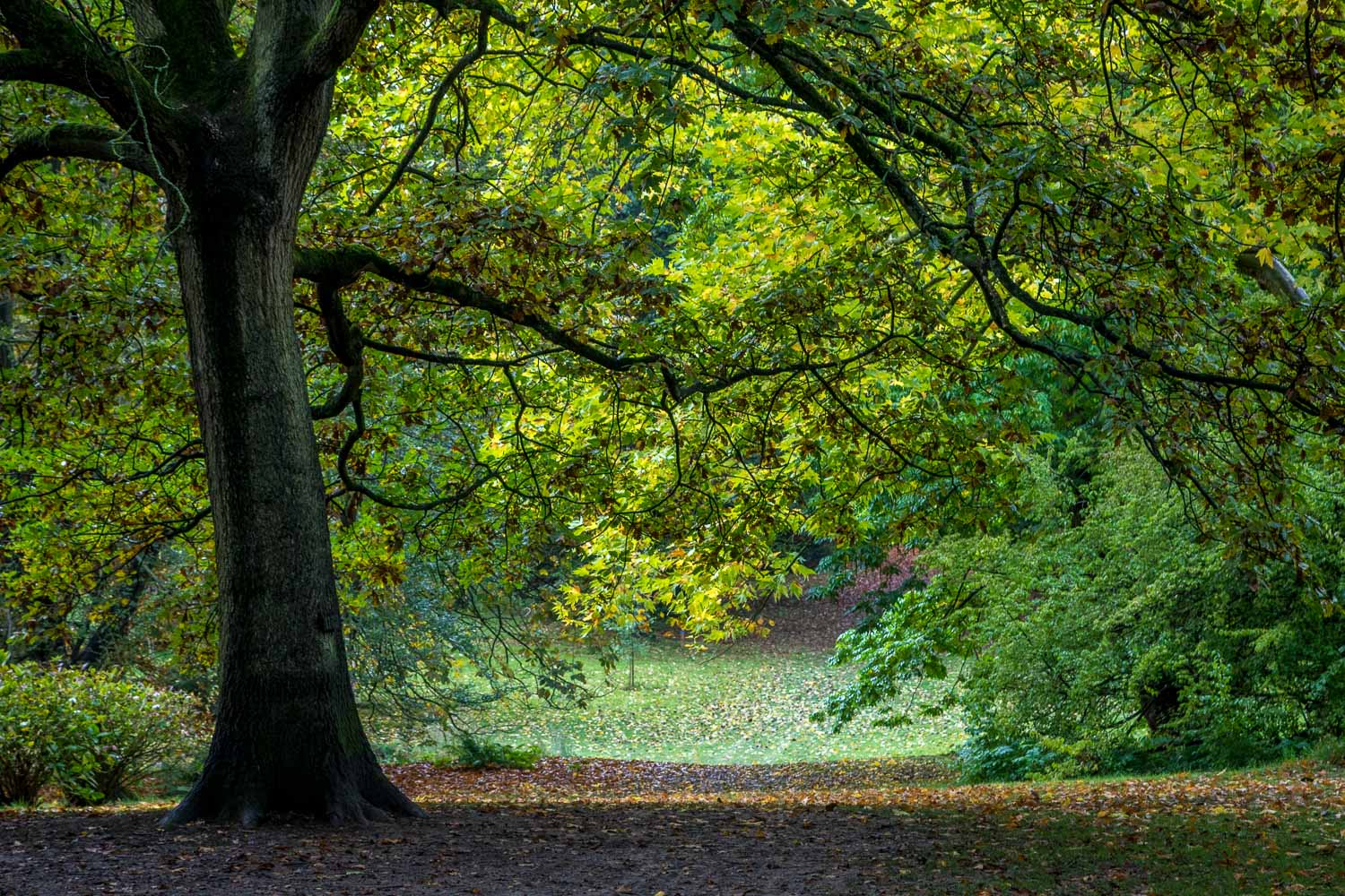 Thorp Perrow, autumn