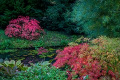 Thorp Perrow, acer, Japanese maple