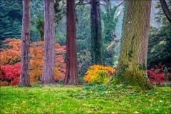 Thorp Perrow autumn colours