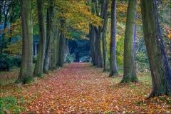 Thorp Perrow walk
