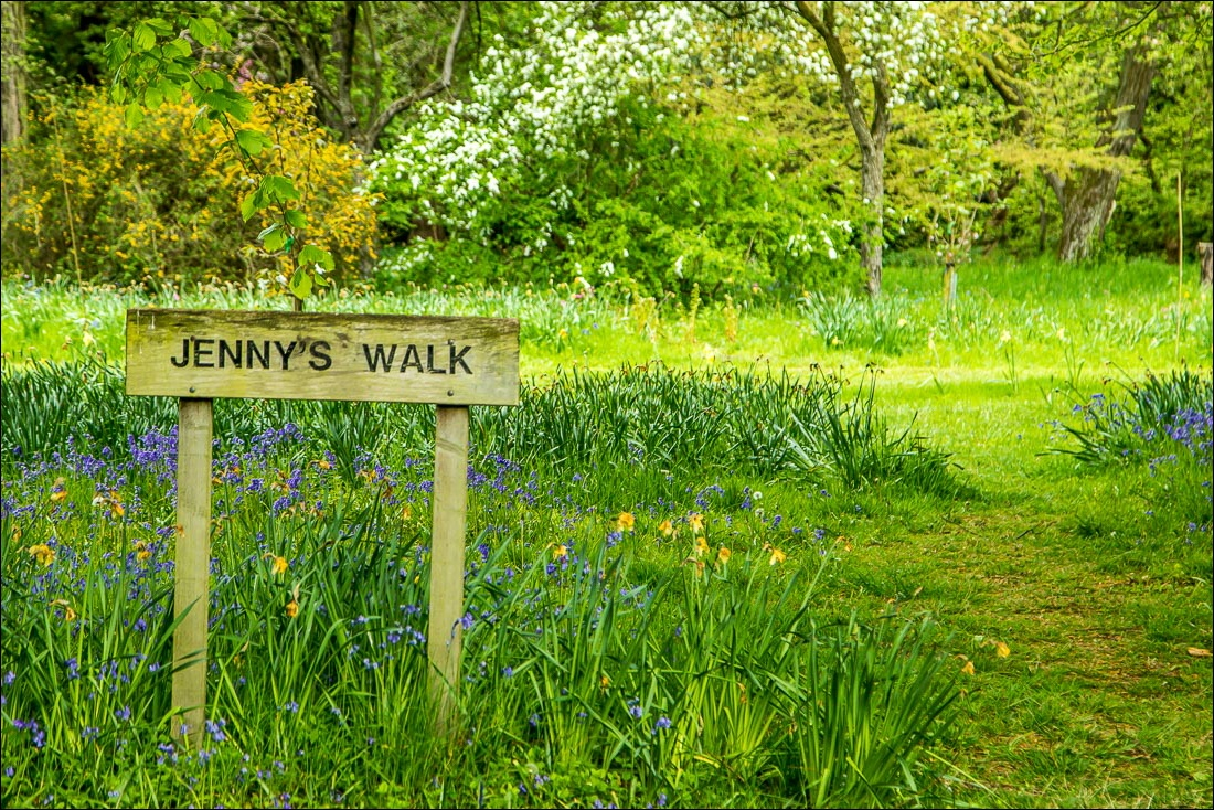 bluebells in Thorp Perrow Arboretum, Jennys walk