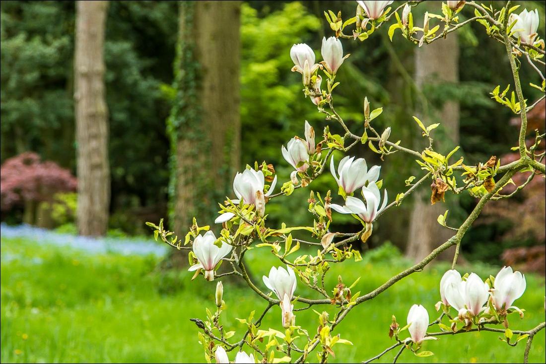 TThorp Perrow Arboretum