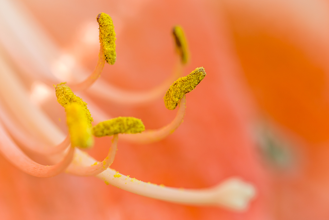 Threave Gardens flowers