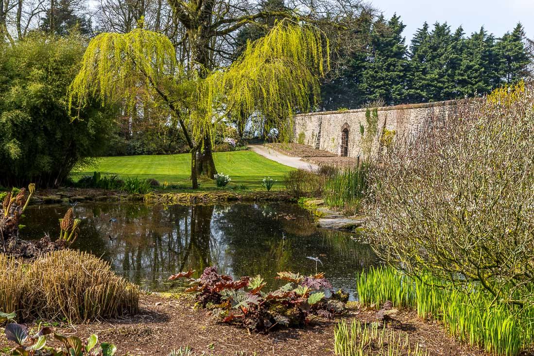 Threave Gardens lily pond