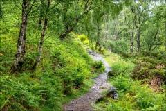 Ullswater Way, Ullswater walk