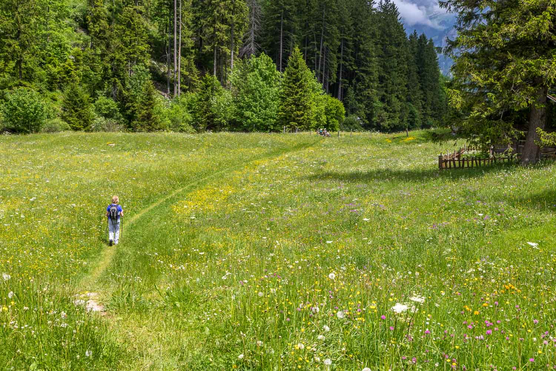 wild flower meadows Swiss alps