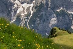 Wild flowers Dolomites